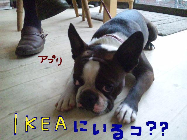 城北公園&しあん★サプライズ再び…_d0187891_20224377.jpg