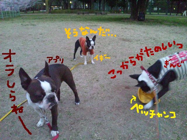 城北公園&しあん★サプライズ再び…_d0187891_2023028.jpg