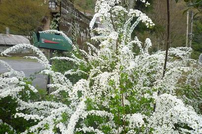 野山の植物探訪_d0087595_9282539.jpg