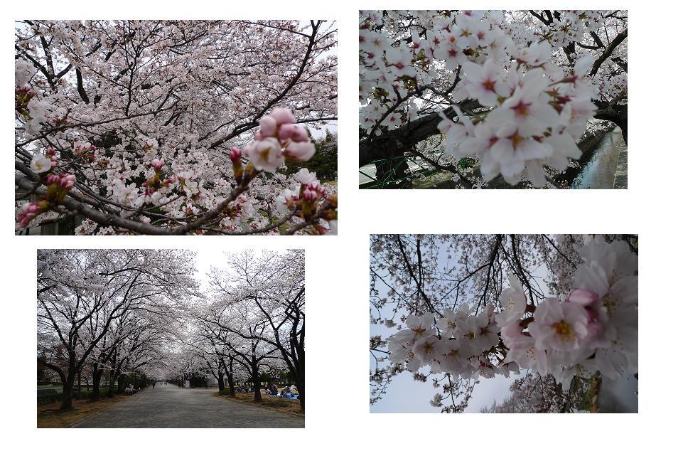 Hanami 2011_a0188798_23113846.jpg