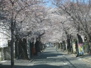 お花見ドライブ<アクティブライフ豊中>_c0107602_921151.jpg