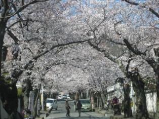 お花見ドライブ<アクティブライフ豊中>_c0107602_9212756.jpg