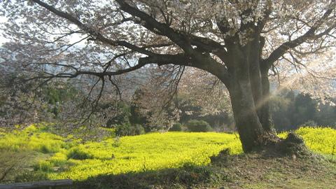 桜の木の下で_f0146802_21201794.jpg