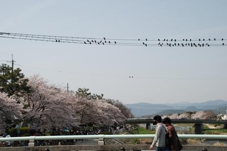 桜前線in京都_f0221707_93397.jpg