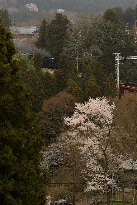 満開の桜と黒煙 - 2011年春・秩父 -_b0190710_2257465.jpg