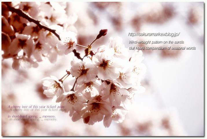 泡沫の春・・・。_f0235723_17511548.jpg