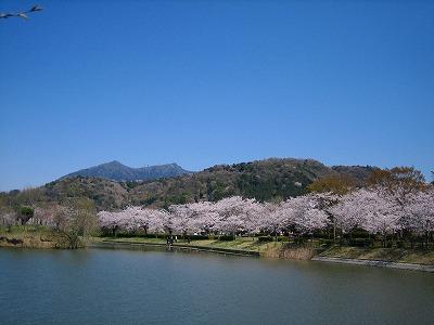 桜に祈る_b0100229_15374289.jpg