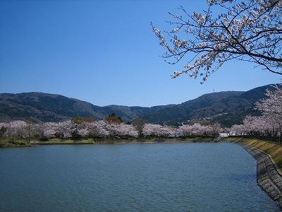 桜に祈る_b0100229_1539019.jpg
