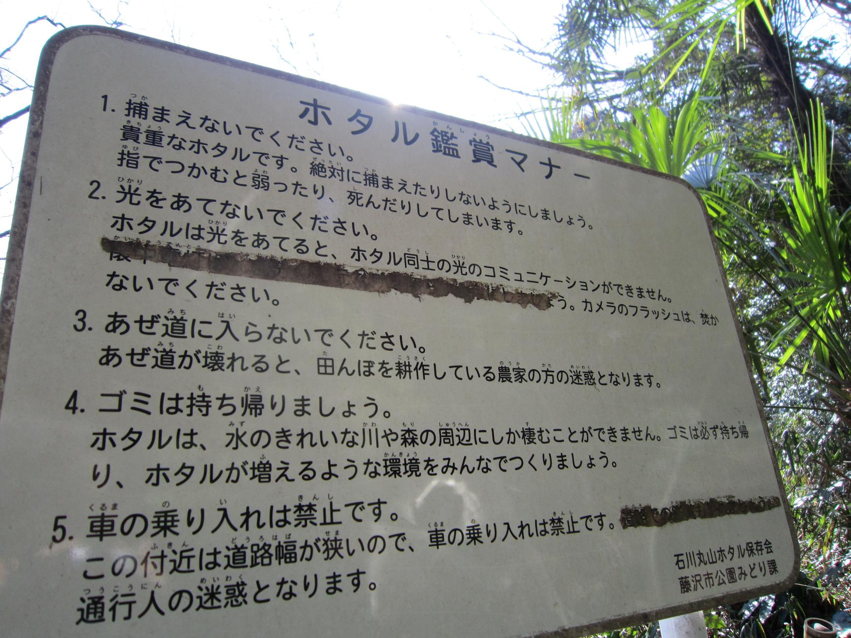 竹やぶ仕事 バゥ_d0084229_22312560.jpg