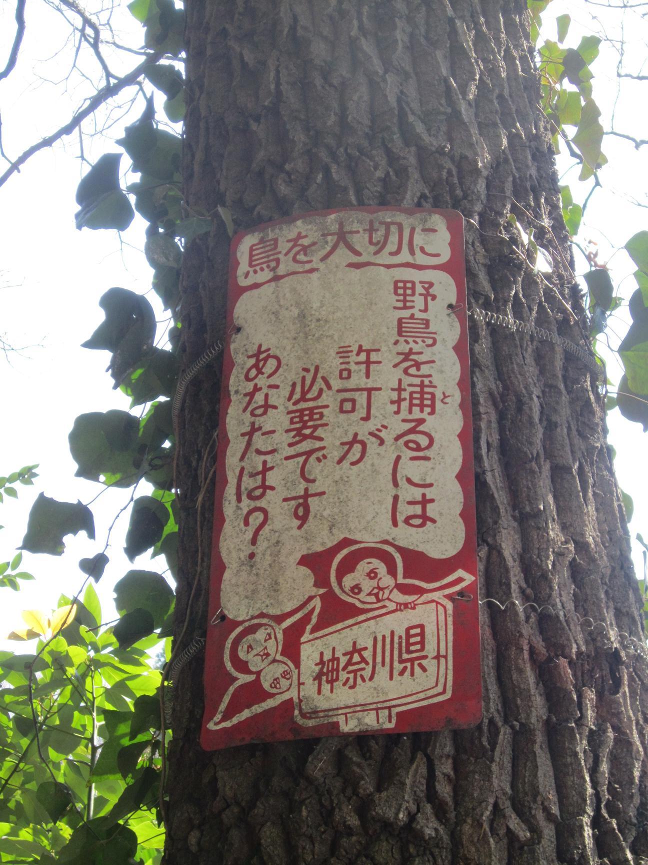 竹やぶ仕事 バゥ_d0084229_22342949.jpg