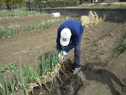 畑仕事 バゥ_d0084229_22475963.jpg