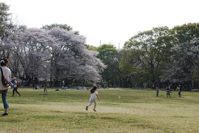 桜満開_c0099133_2354537.jpg