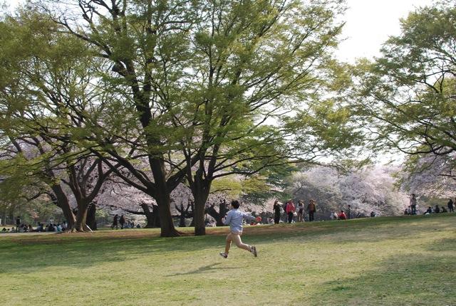 桜満開_c0099133_23555293.jpg