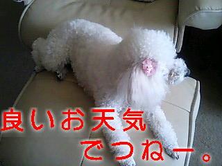 c0117239_11241713.jpg