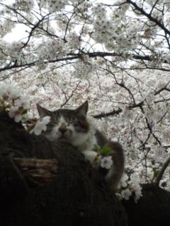 上野公園のにゃんこ_e0114246_2222142.jpg
