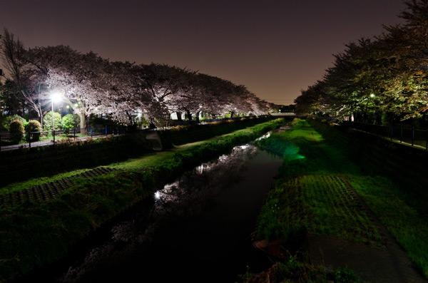 野川の夜桜 2011_a0003650_2331785.jpg