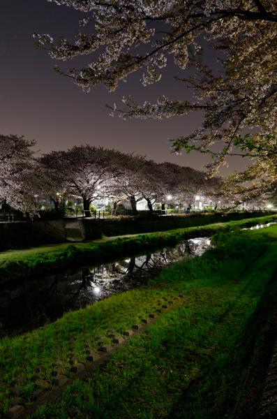野川の夜桜 2011_a0003650_2333077.jpg