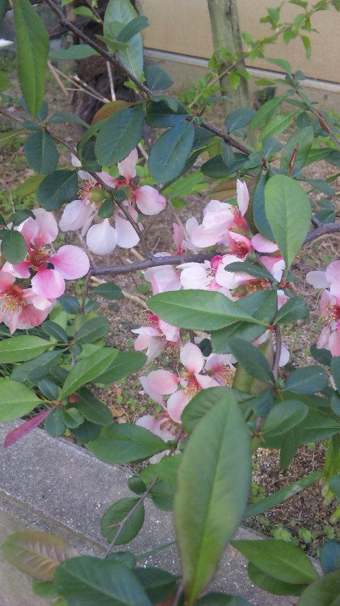 春の知らせ_e0175651_1351319.jpg