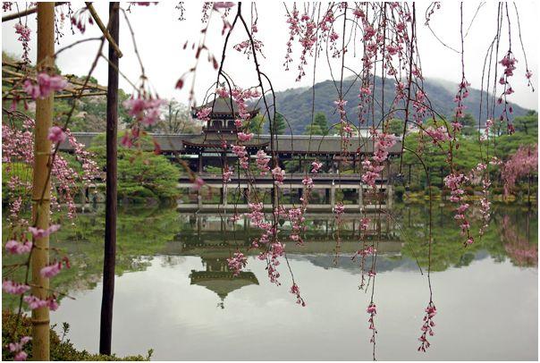 京の春 _f0012154_13342790.jpg