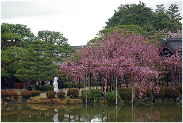 京の春 _f0012154_1512263.jpg