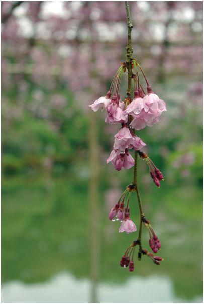 京の春 _f0012154_1514097.jpg