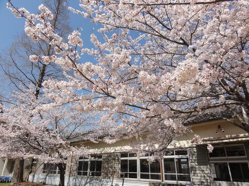 ブロッコリー収穫 in 中孝子の清水農園_c0108460_1738433.jpg