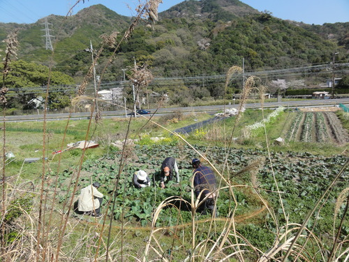 ブロッコリー収穫 in 中孝子の清水農園_c0108460_1745215.jpg