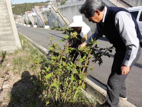 ブロッコリー収穫 in 中孝子の清水農園_c0108460_17472558.jpg