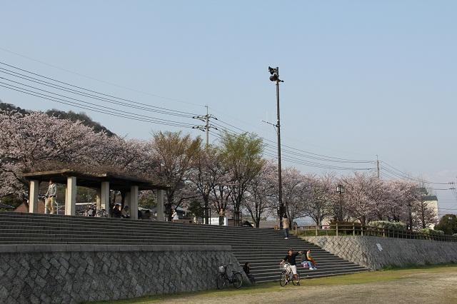 さくら便り 2011 海田町瀬野川河川敷畝公園_b0095061_1121534.jpg