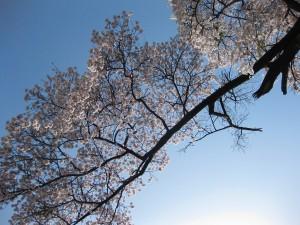 養生園の春夏秋冬_b0218062_15374188.jpg
