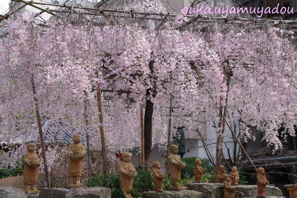 淡い春・京の桜_a0157263_22573468.jpg