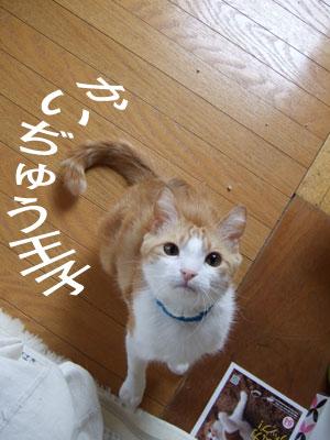 かいぢゅう王子4たび_a0064067_23292792.jpg