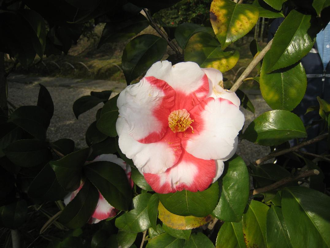 松花堂庭園_f0205367_14234266.jpg