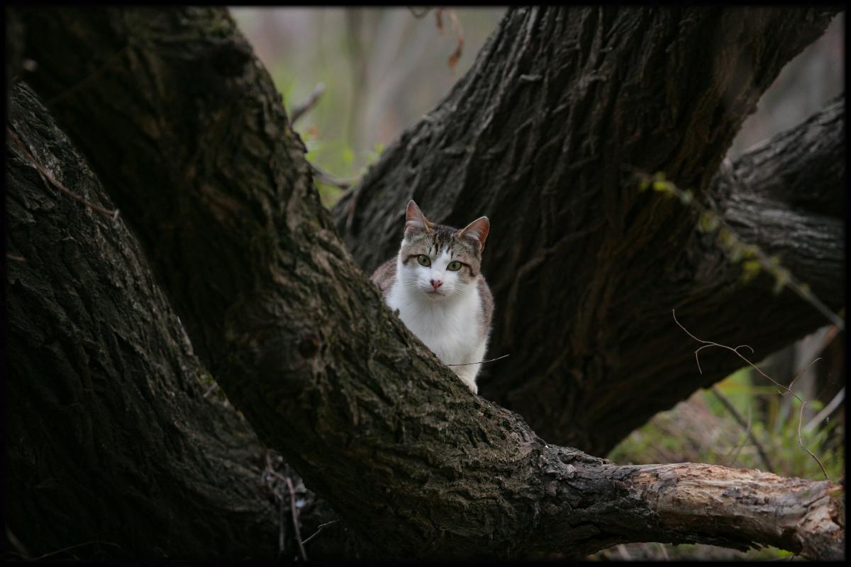 猫にゃん_f0021869_22233033.jpg
