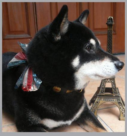 パリのお友達。パリのワンコは仕事好き!_e0236072_7171685.jpg