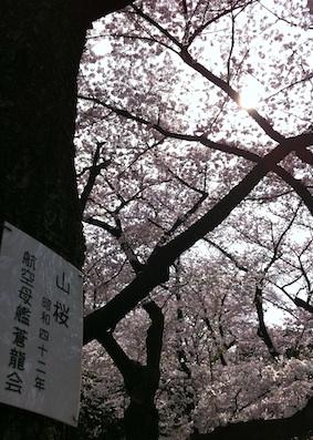 靖国神社の桜_f0072976_8472646.jpg