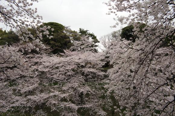 千鳥ヶ淵をNちゃん、Yッキーと散歩!_c0180686_0194671.jpg