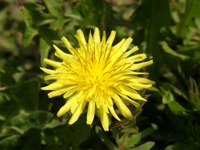 野に咲く花のように_c0057390_22302686.jpg