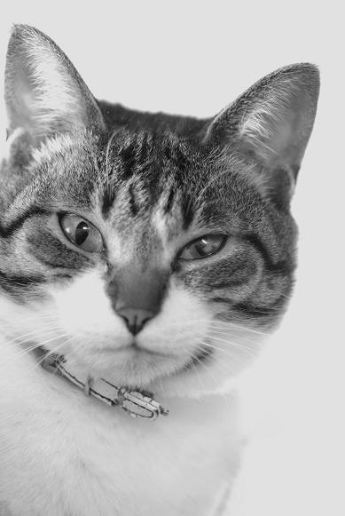 うちの猫 #3_f0155808_19394364.jpg