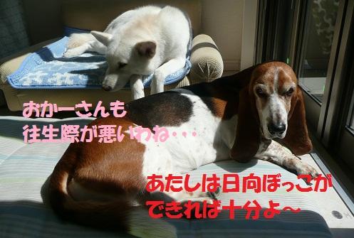 f0121712_1515886.jpg