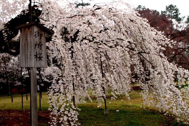 世界遺産の春 上賀茂神社_e0048413_20455188.jpg