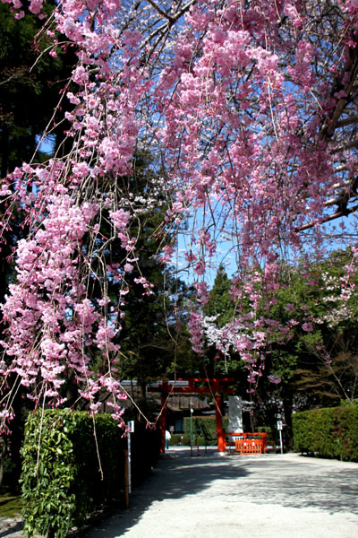 世界遺産の春 上賀茂神社_e0048413_20465681.jpg