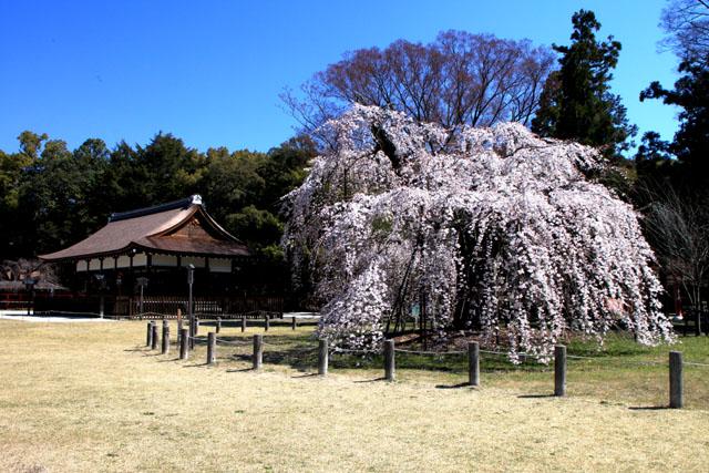 世界遺産の春 上賀茂神社_e0048413_2046695.jpg