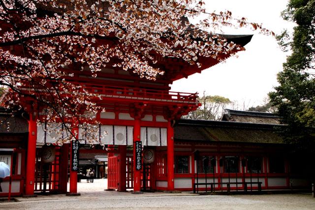 世界遺産の春 下鴨神社_e0048413_21143180.jpg