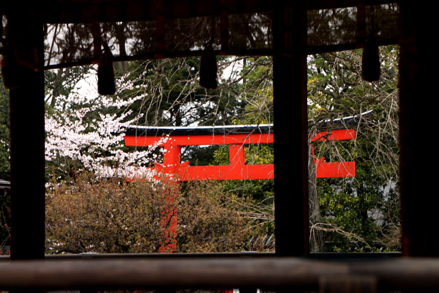 世界遺産の春 下鴨神社_e0048413_21151549.jpg