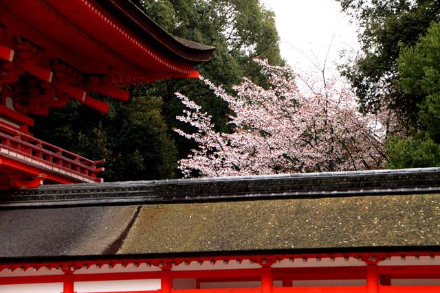 世界遺産の春 下鴨神社_e0048413_2115392.jpg