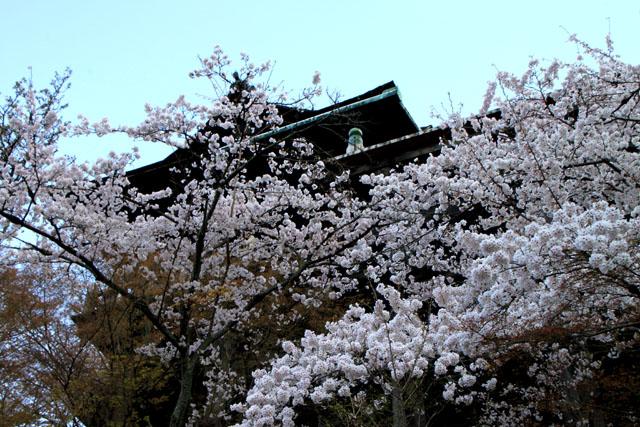 世界遺産の春 清水寺_e0048413_21592491.jpg