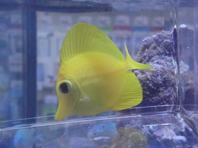海水魚・サンゴ・水草・淡水魚_f0189122_12532784.jpg