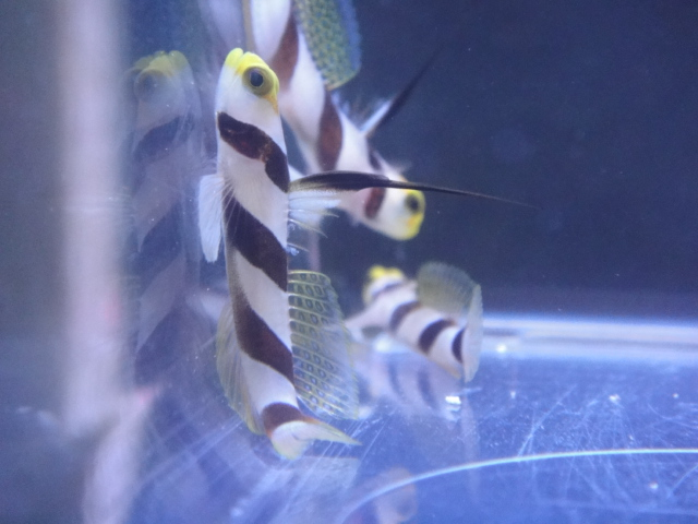 海水魚・サンゴ・水草・淡水魚_f0189122_12553189.jpg