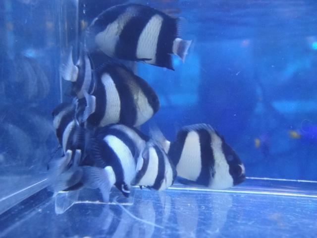 海水魚・サンゴ・水草・淡水魚_f0189122_12572619.jpg